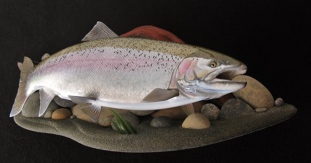 Alaskan Rainbow Trout featured on Stream bed wall mount display Luke Filmer Blackwater Fish Replicas
