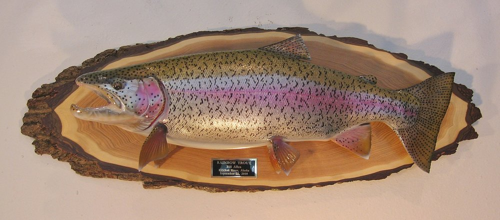 Rainbow Trout fish replica on classic oval live edge panel Luke Filmer Blackwater Fish Replicas