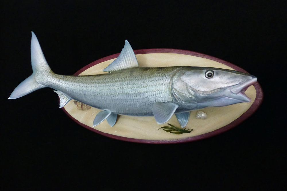 Bonefish fish replica Luke Filmer Blackwater Fish Replicas.jpg