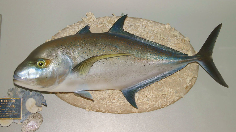 Blue Fin Trevally fish replica Luke Filmer Blackwater Fish Replicas.jpg