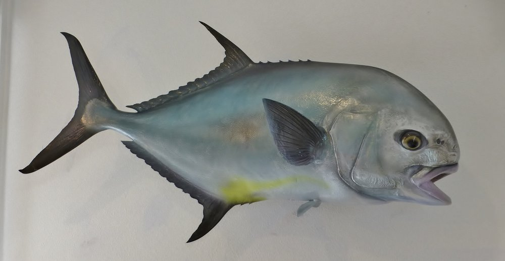 permit fish replica by Luke Filmer