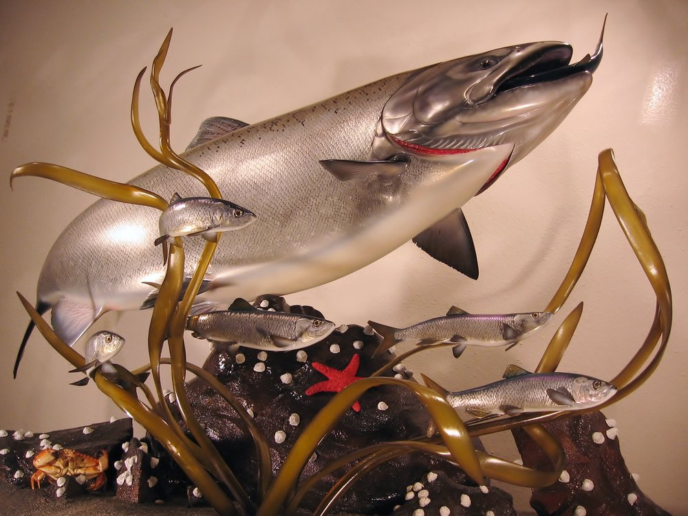 King Salmon fish replica mount created by fish artist Luke Filmer