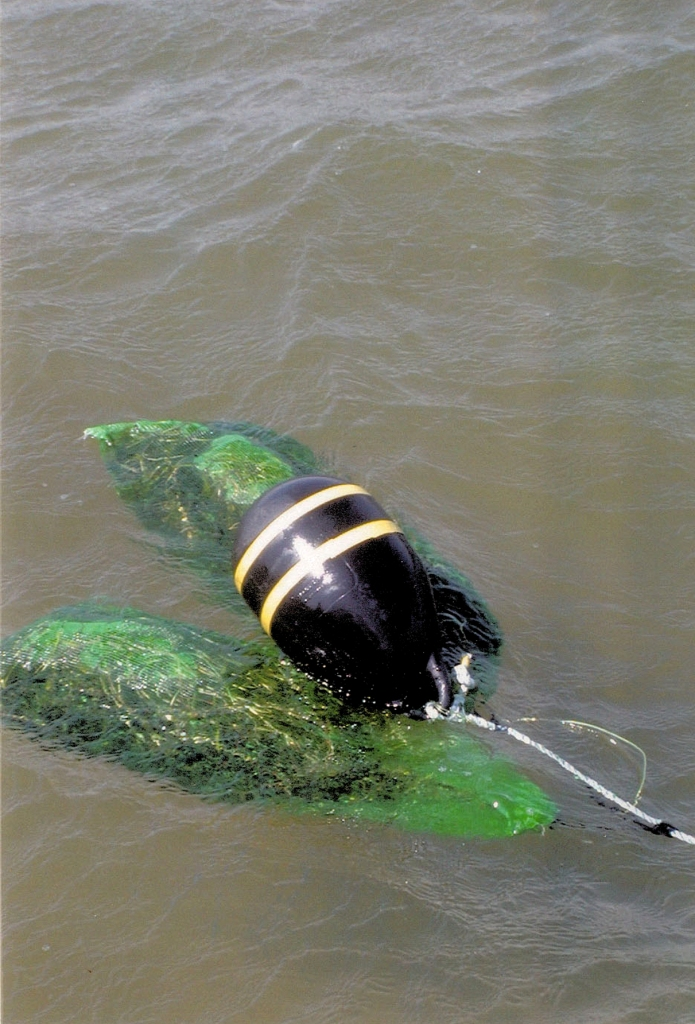 Anchored buoys scrape the pond floor and damage or destroy eelgrass plants