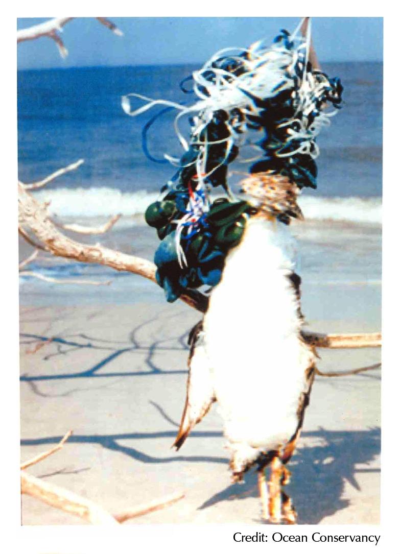 Bird 2 with netting.jpg