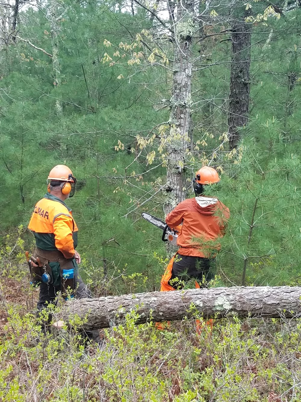 Land Stewardship Coordinator, Tommy Blanchard, working under the direction of chainsaw safety trainer, Bill Girard.