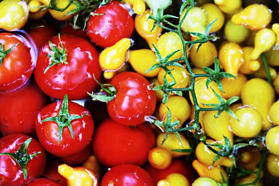 tomatoesBIG.jpg