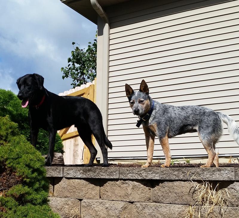 Keeping Watch on the Backyard