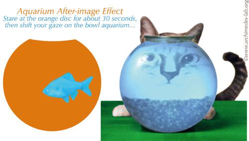 """""""Aquarium Effect"""""""