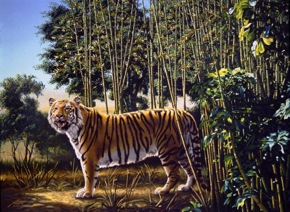 """The Hidden Tiger"""
