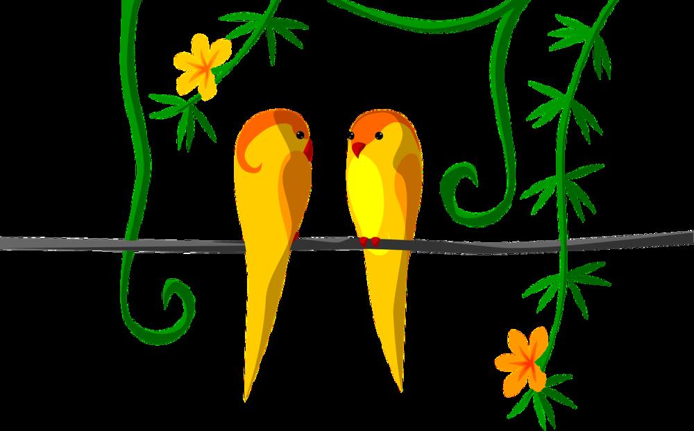 orange parrot puzzle