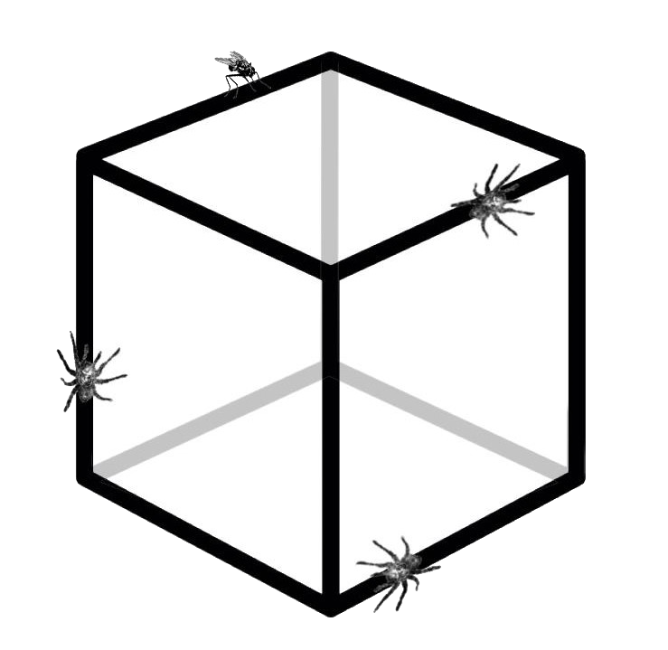 spiders and a fly puzzle