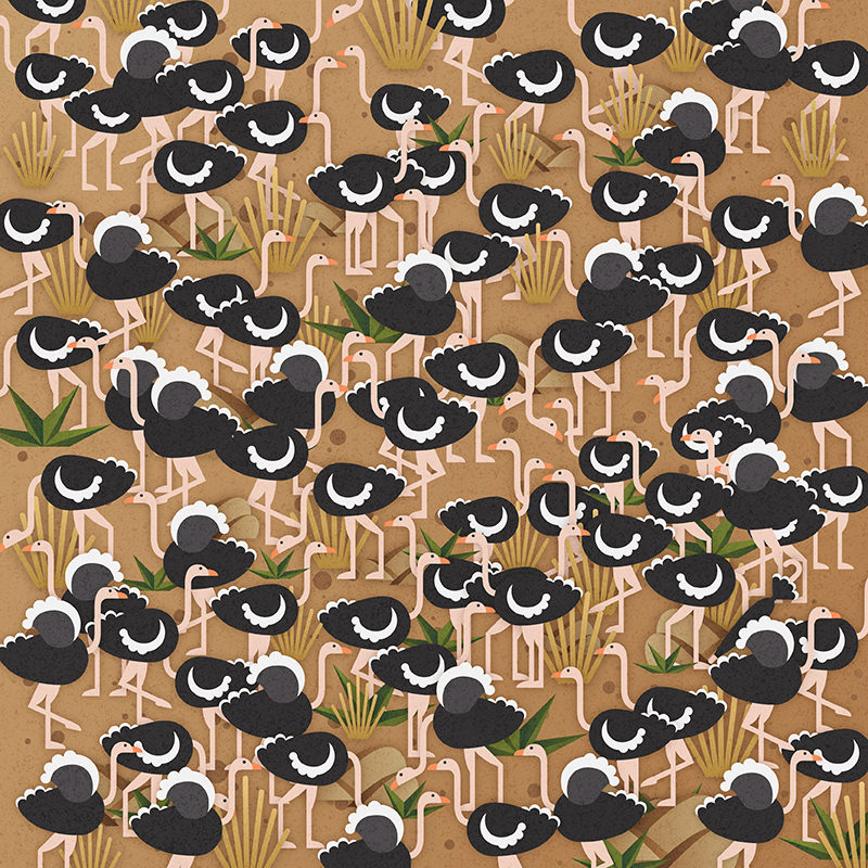 Can you find the umbrella hidden among the ostriches?  Source:  Lenstore.co.uk