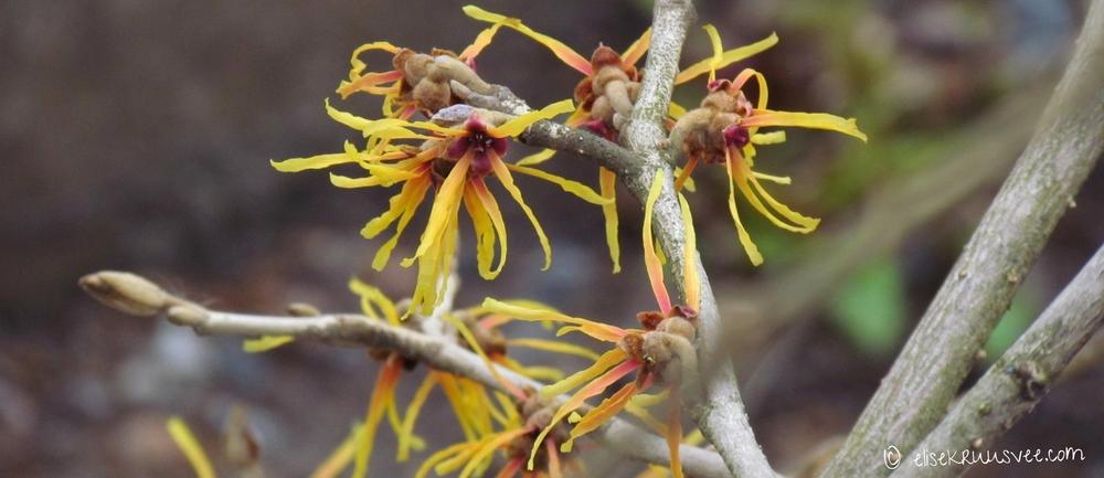 botaanikaaed 065 - Copy.JPG