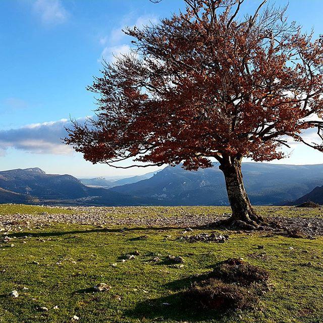 Brave solo tree.  #urbasa #urbasanationalpark #solotree #solotrees #brave #amazingviews #takingthemoment #ontheroad #eurotrips  #travelingeurope #seeingtheworldwhilelivinginthecar