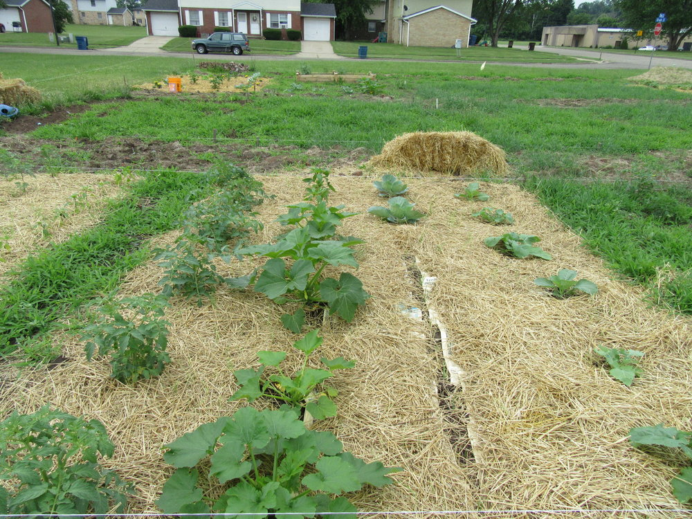 ROW 22 - Community Garden at St James AME_2.JPG