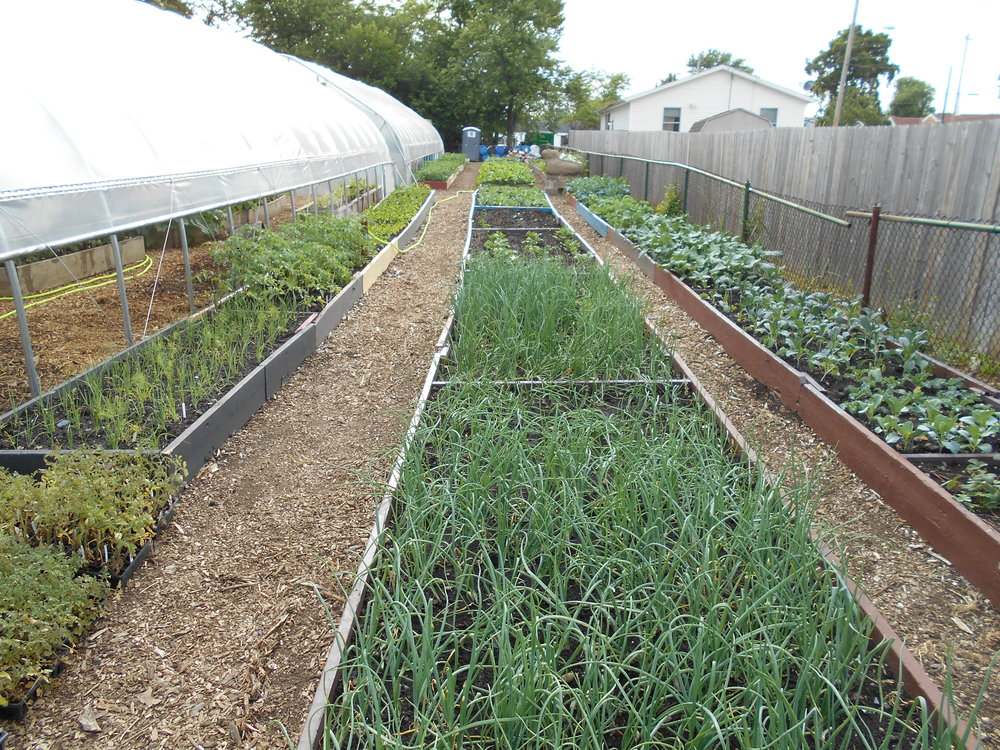 ROW 45 - Community Garden & Shared Use at StarkFresh Food Production_2.JPG