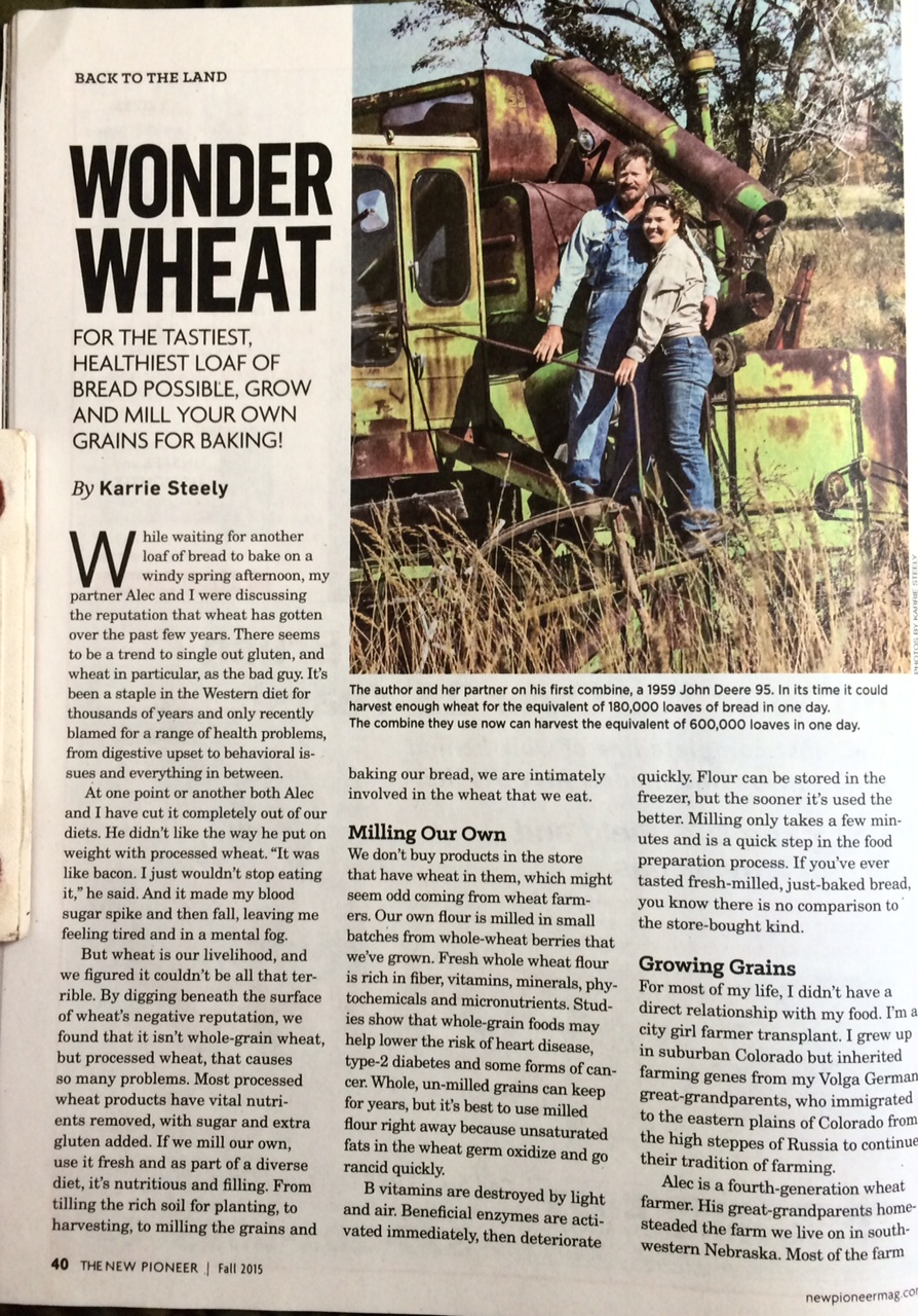 wheat 1.jpg