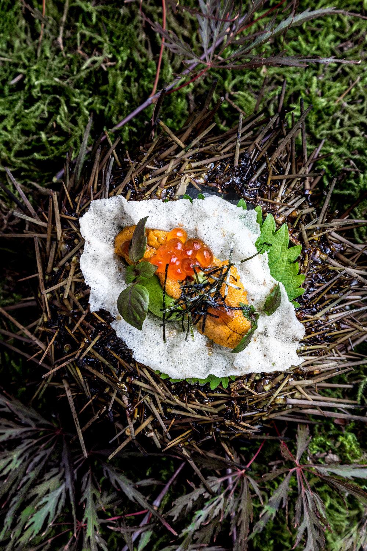 BLVD_Local Sea Urchin 1_Leila Kwok.jpg
