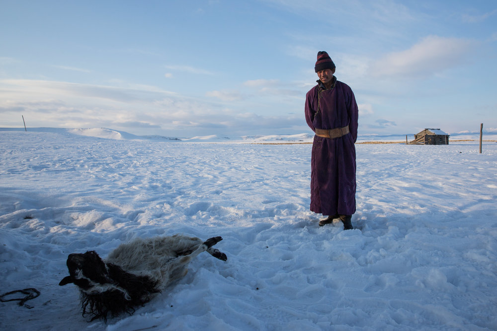 Herder Batsuri Sharkhuu with a dead sheep. (Credit: Taylor Weidman)