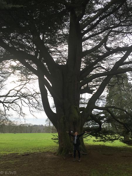 Westonbirt, National Arboretum.