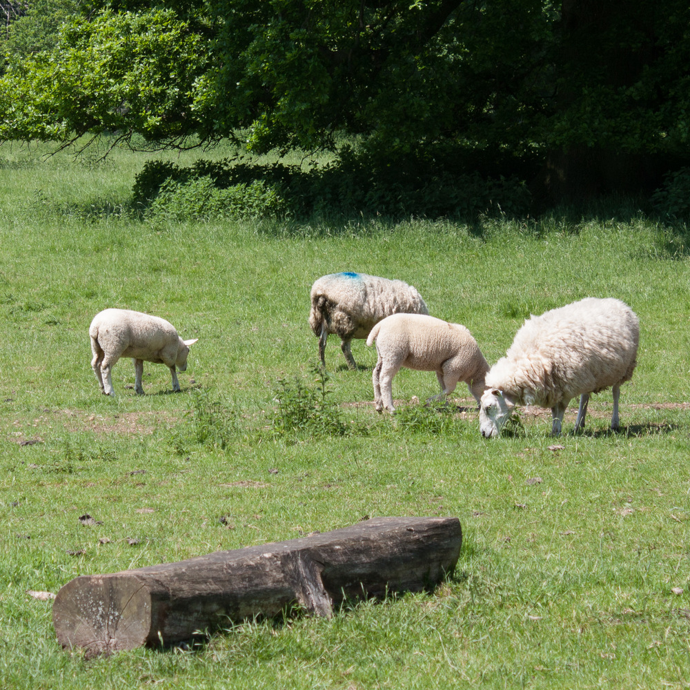 Wool Fair-5.jpg