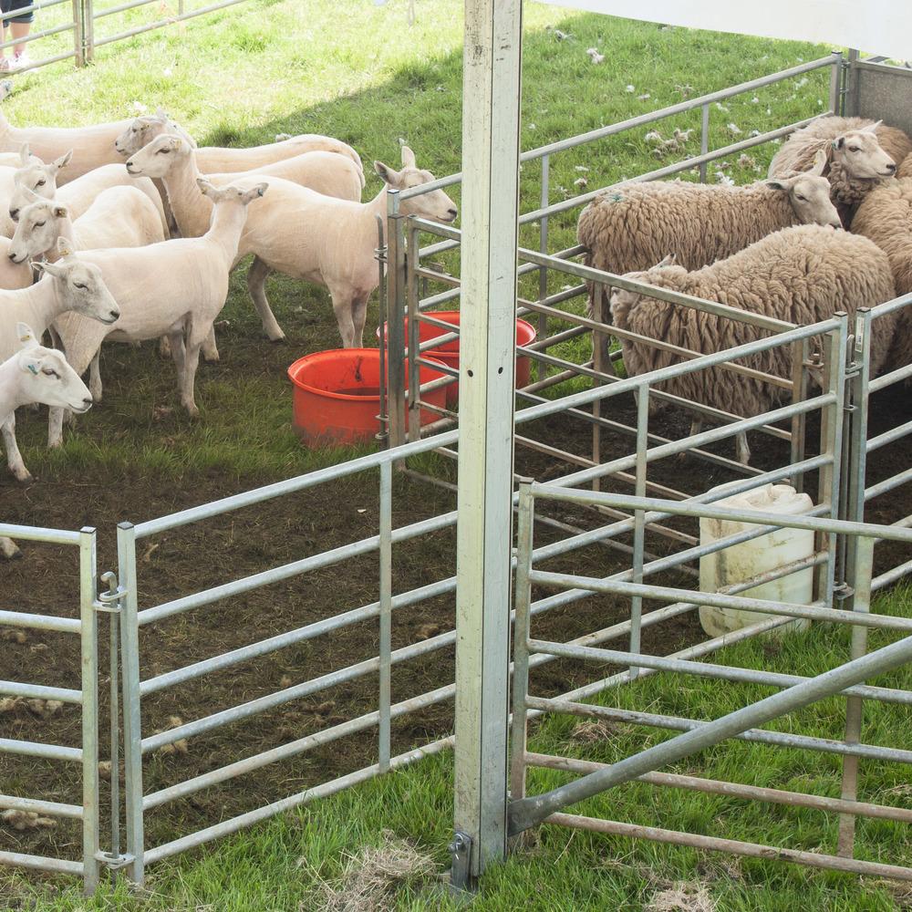 Wool Fair-7.jpg