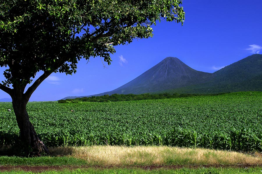13 (Volcan Izalco).jpg