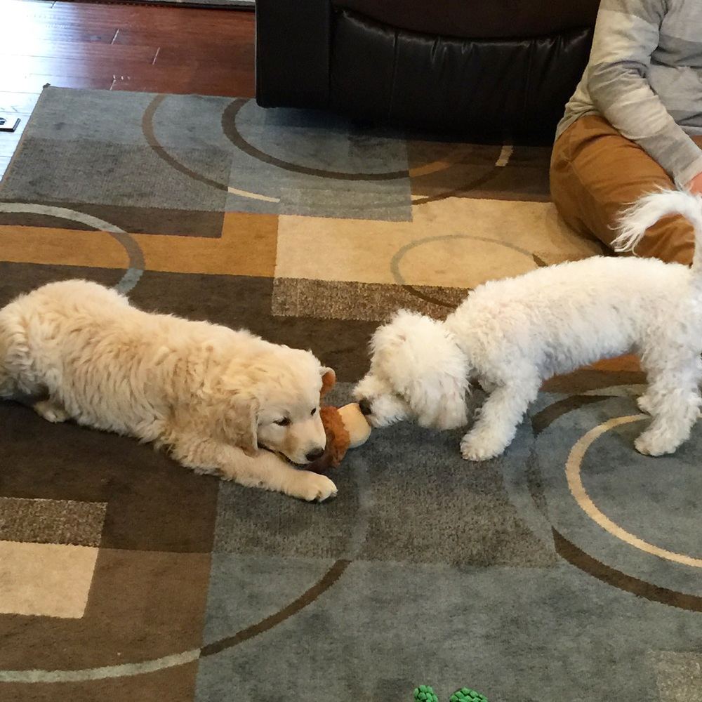 From left to right, Calvin and Gerald playing a slightly unfair game of tug-of-war. Calvin is four months younger than Gerald, but already twice as big.