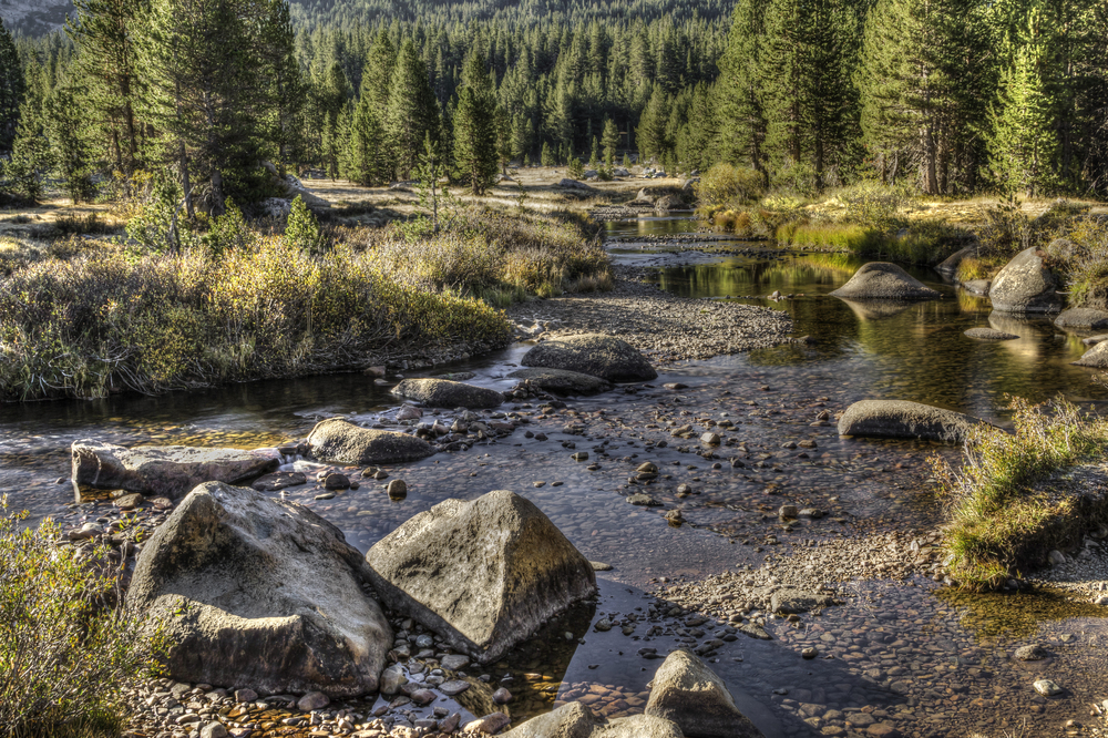 Creek at Sunrise- Tuolumne Meadows