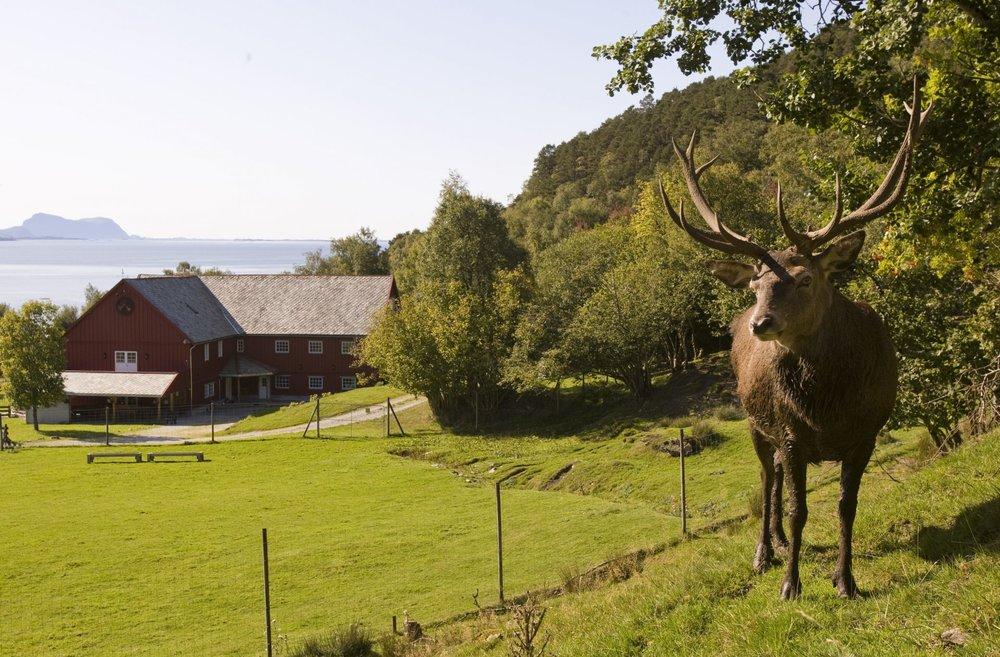 Norsk Hjortesenter