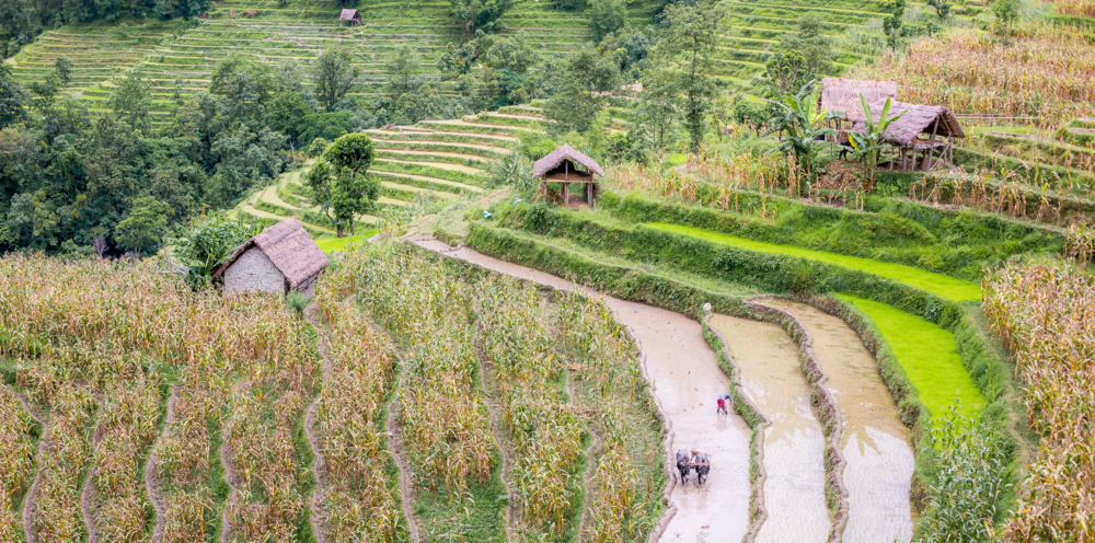The beautiful rice terraces of Necha.