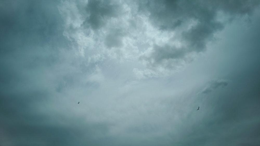 Bird-Watcher-Big-American-Story-19.jpg