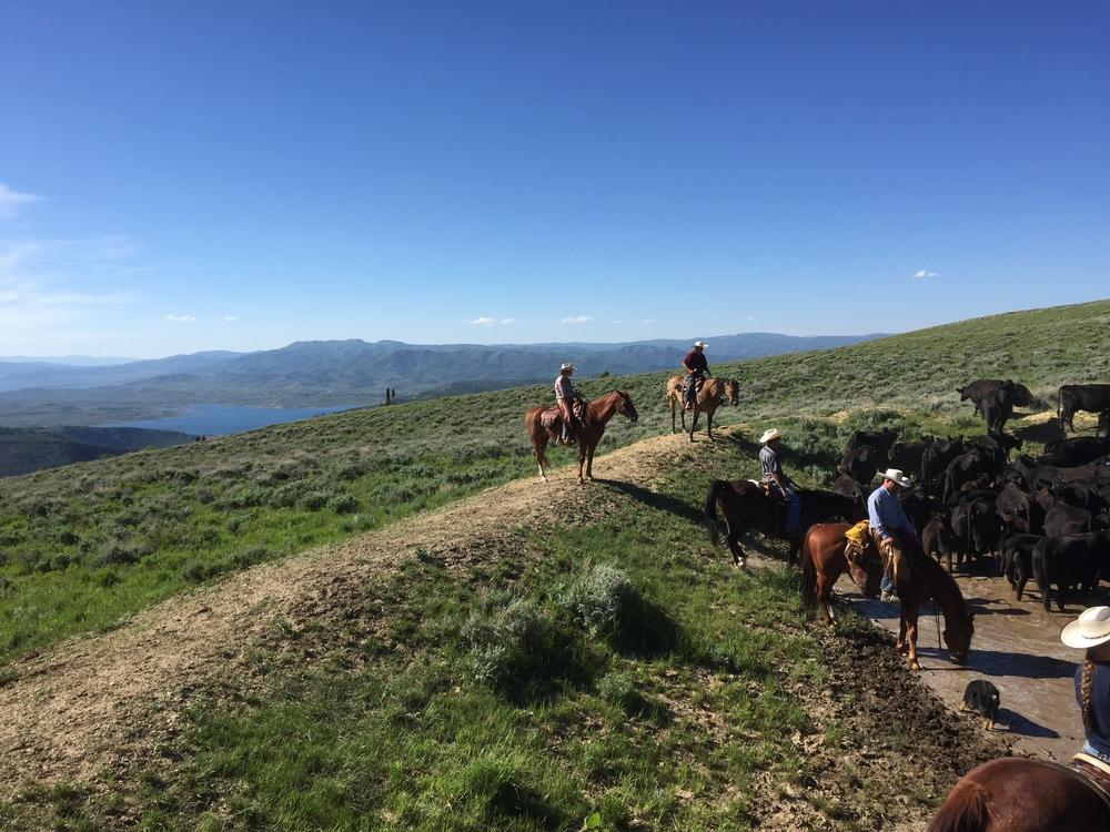herd view.JPG