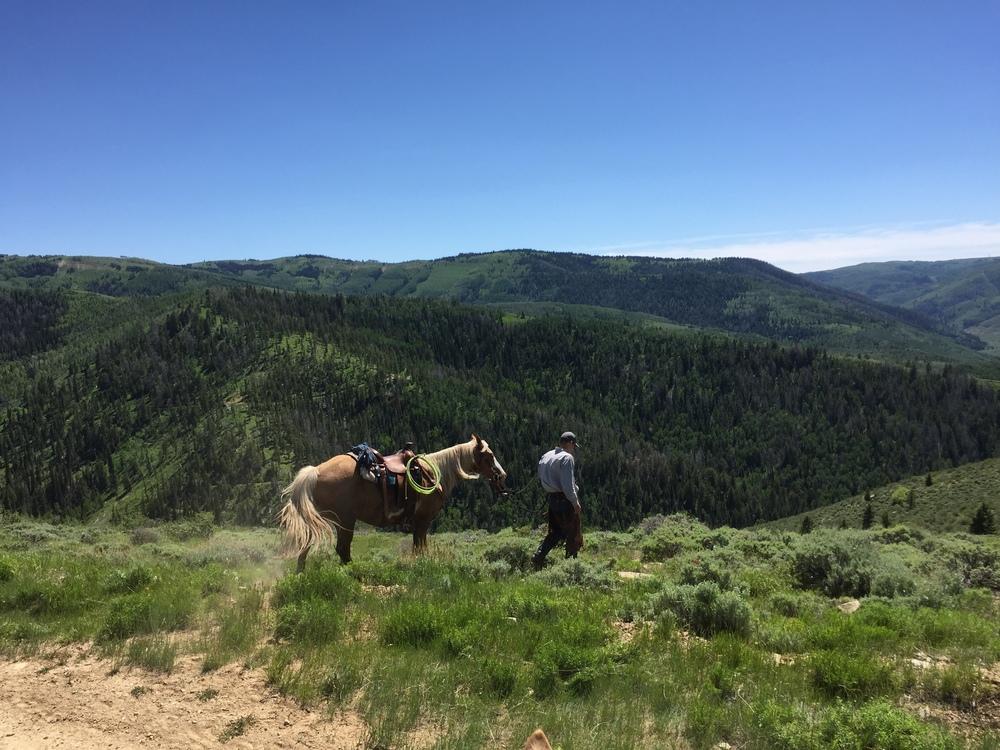 walk horse view.JPG