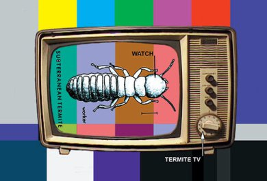 termite.jpeg