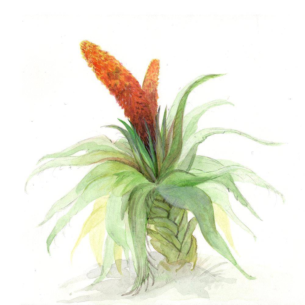 plantstudy_150.jpg