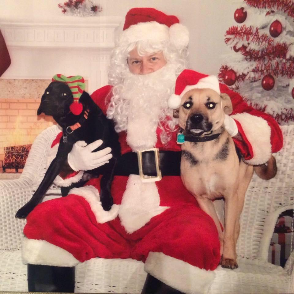 Dog Santa.jpg