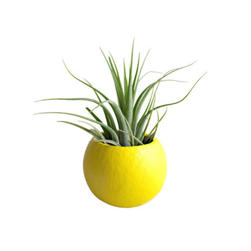 Yellow-Planter-Houzz.jpg