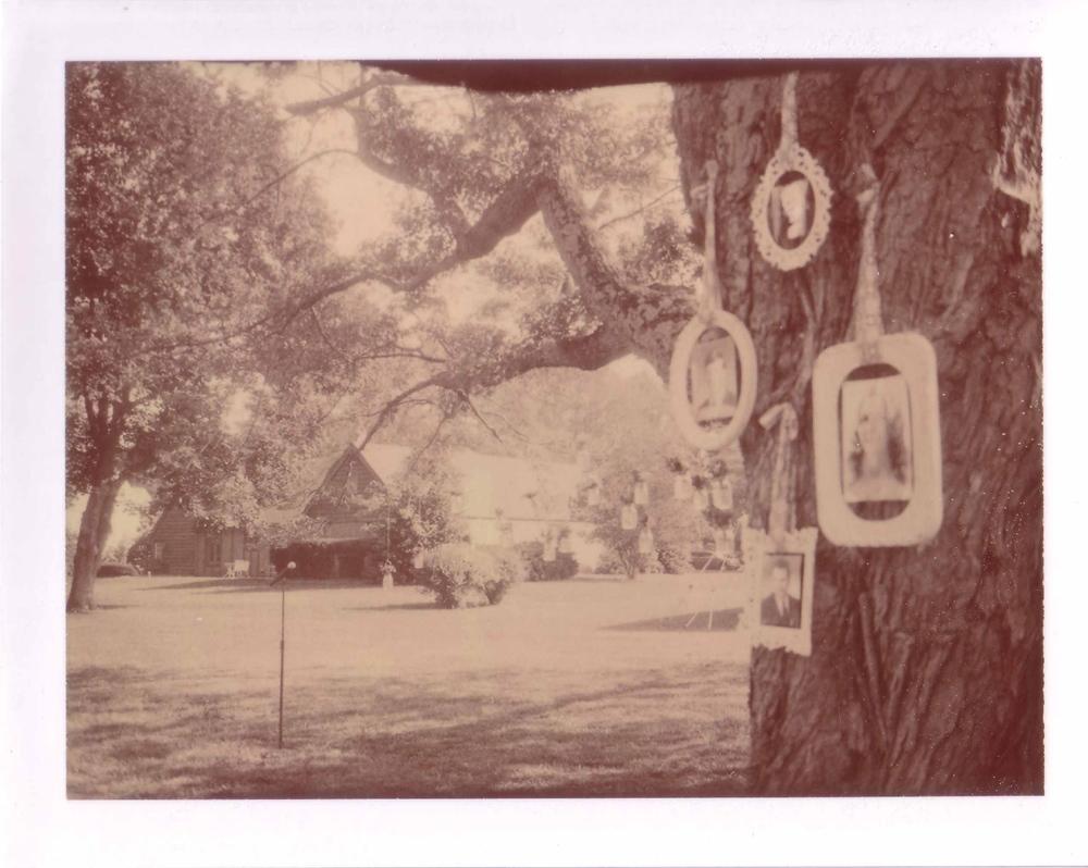 TreeFrames_o.jpg