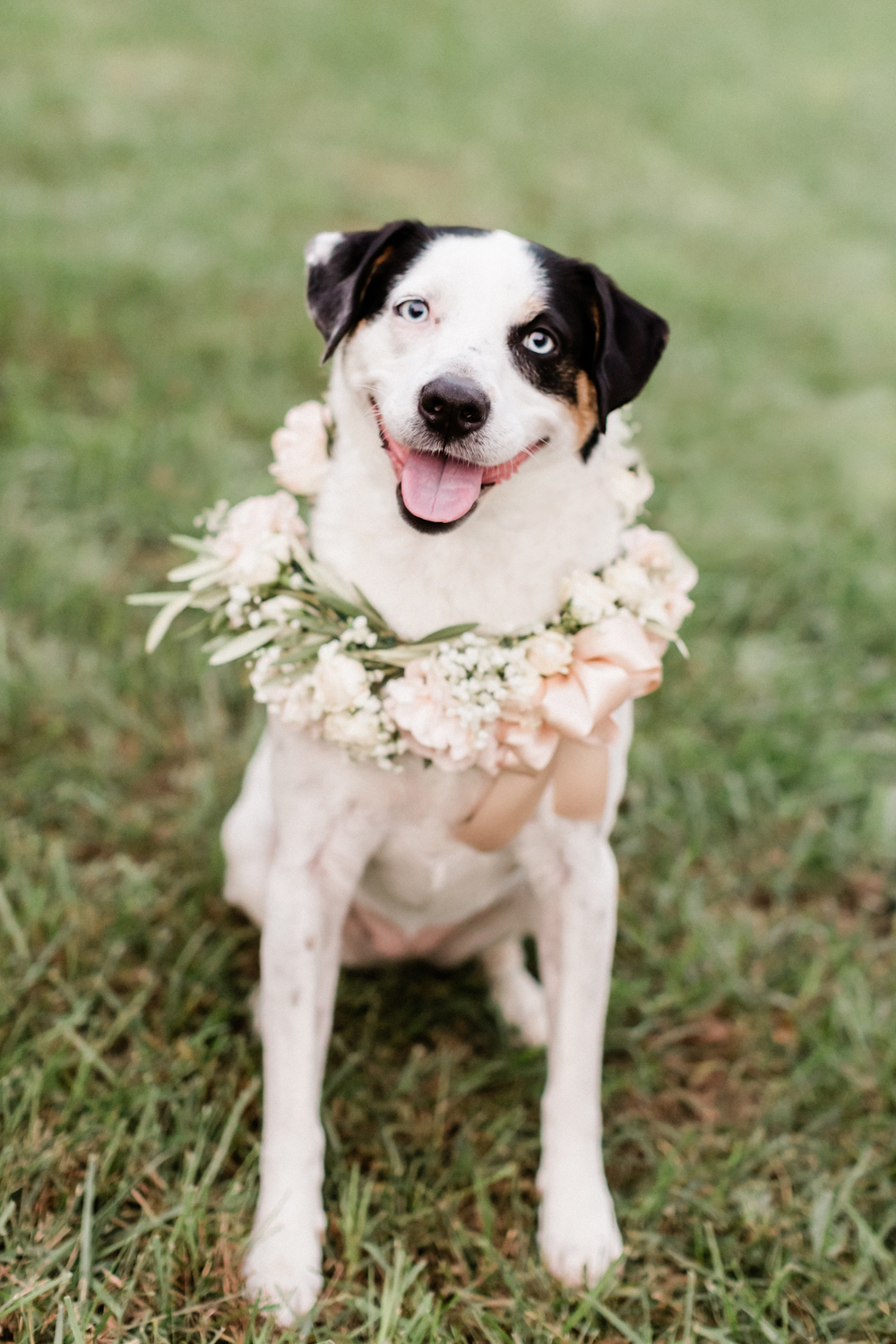Dog in Wedding Party Picture with Flower Collar