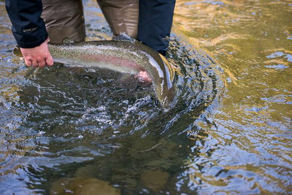 bogie_fishing_032.jpg