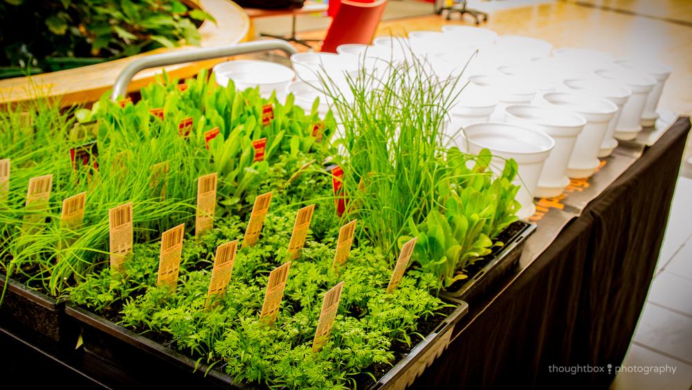 kids-workshop-events-geelong-garden-the-party-girl.jpg