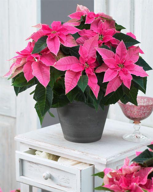 Princettia Hot Pink ambiance pic 11.jpg