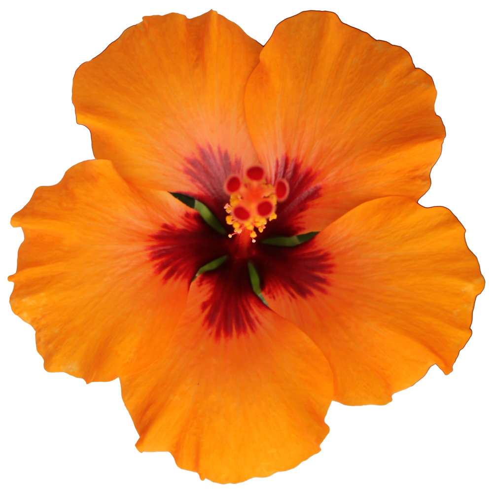 Petit Orange WK 14-38