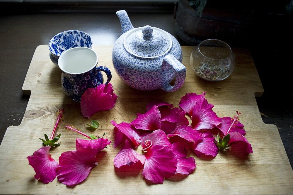 hibiscus 02.jpg