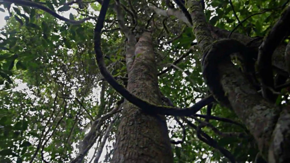 Hack Climate Madagascar Mangrove Trees 7.jpg