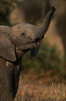 The Best Time to Travel to Africa to See Elephants