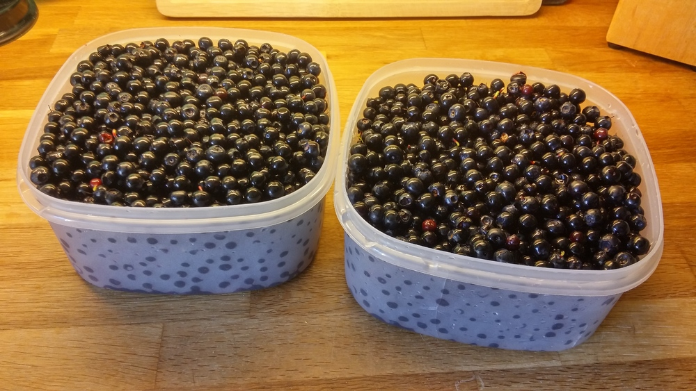 Brought home 2kg of wild blueberries...mmm.