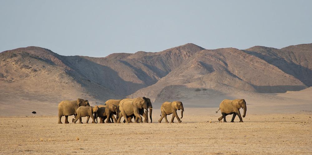 Enactus Safari Travel Namibia 34.jpg