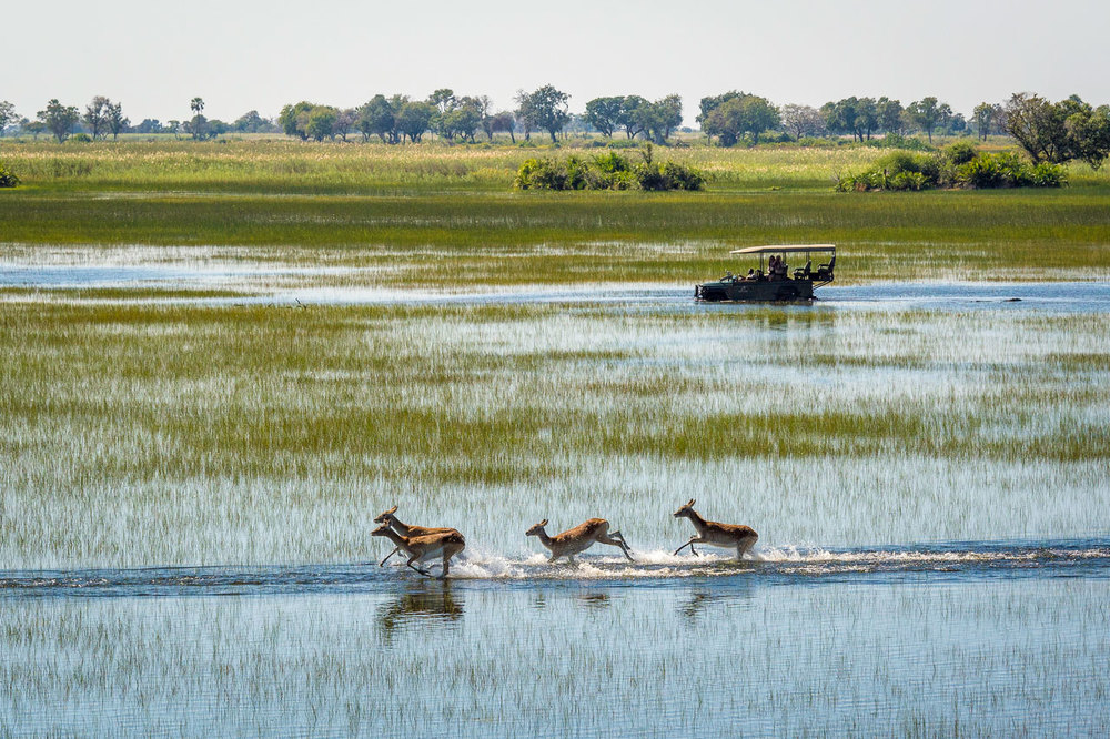 Enactus-safari-botswana-4.jpg